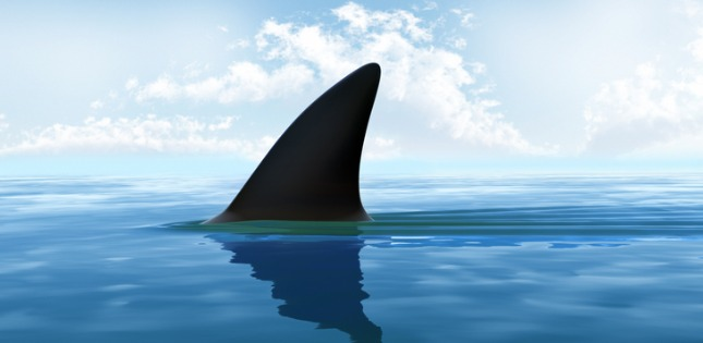shark-fin-above-water-xxxl-size-picture-id157562987